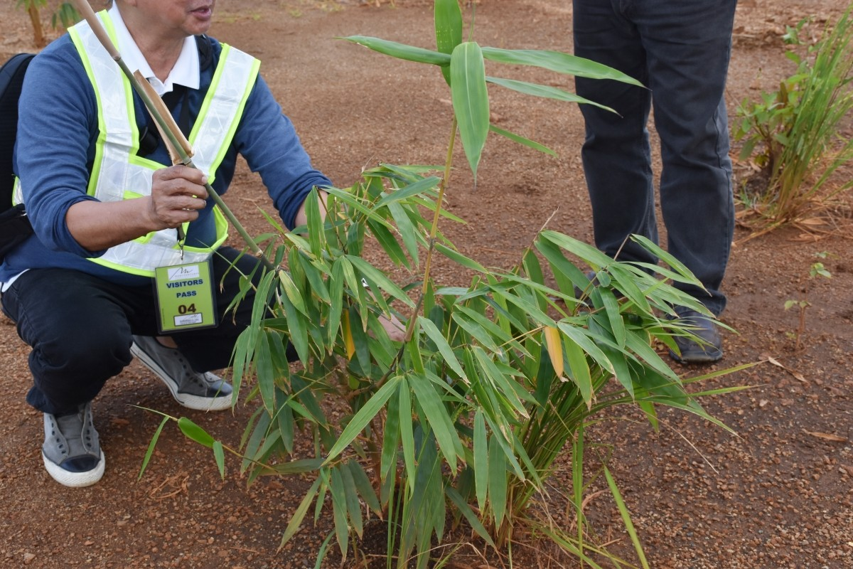 BOI, PBFI visit Marcventures' bamboo plantation in Surigao del Sur